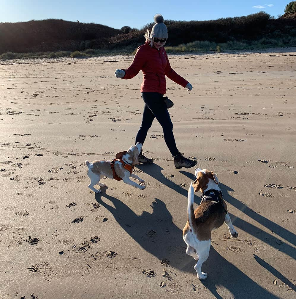 can beagles be let off the lead