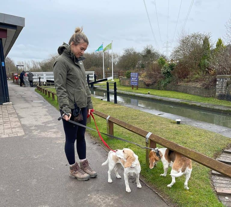 How to Stop a Beagle From Puling: Leash Training Tips for Beagles
